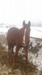 Falls ihr mich besuchen wollt, sucht einfach eines der größten Pferde auf der Koppel.